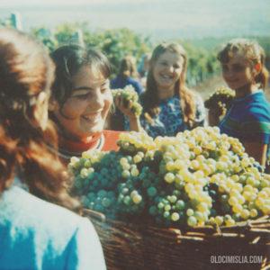 Молодежь на сборе винограда. Недалеко от села Гура Галбеней. 1972 г. Фото: Ион Кибзий.